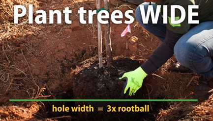 tree being planted wide