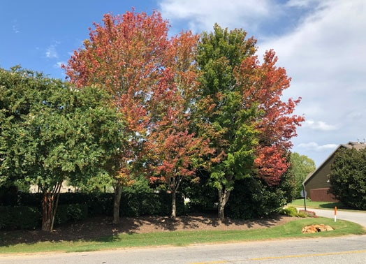 roadside with trees changing colors