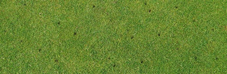 close view of an aerated lawn