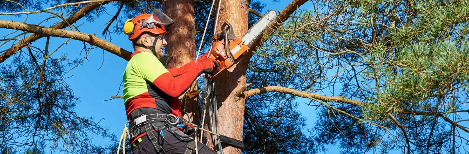 neighborhood arborist in a tree with a chainsaw
