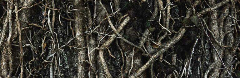 girdling tree roots