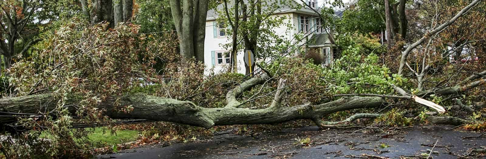 downed tree in the street in front of house