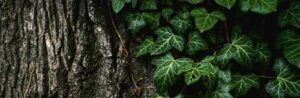 tree covered with ivy