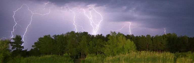 several lightning bolts striking a dense wood with lots of trees