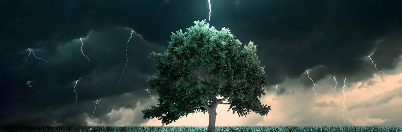 tree being struck by lightning