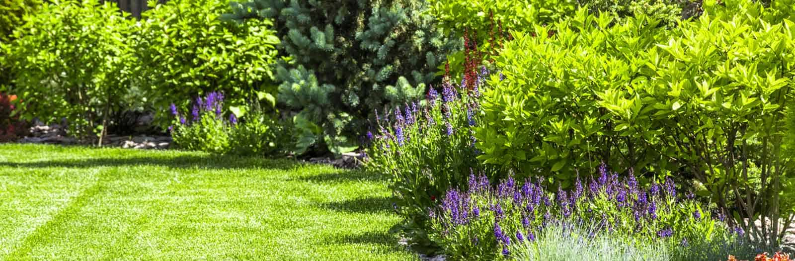 yard full of spring shrubs that are in need of pruning