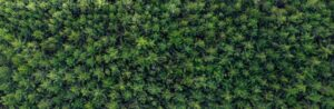 large group of crowded trees from a top view