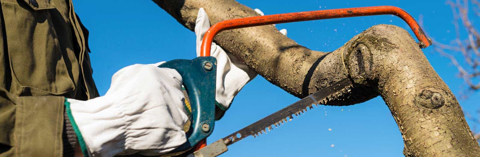 close up of man pruning a tree with a saw