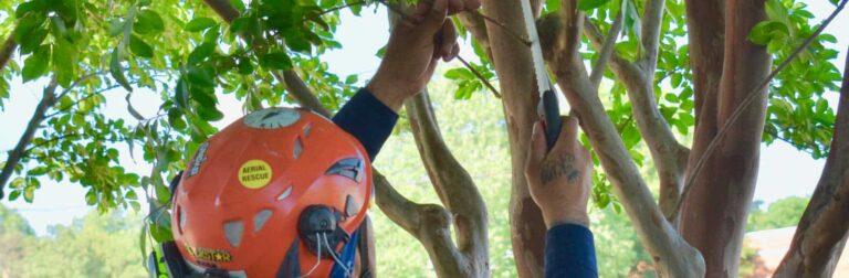 man in orange safety hat pruning tree