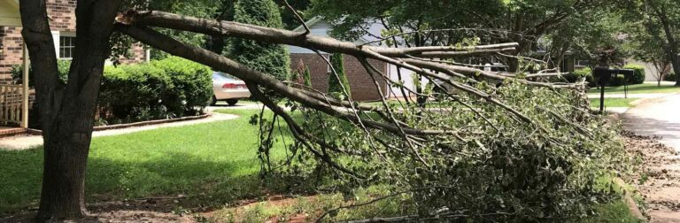 tree limb that has broken off and needs a tree inspection