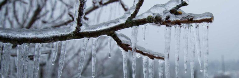 tree limb frozen in ice