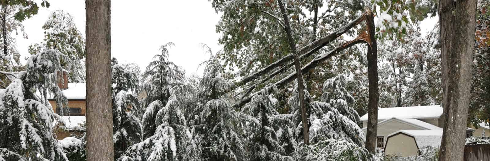 trees damaged and fallen from snow storm