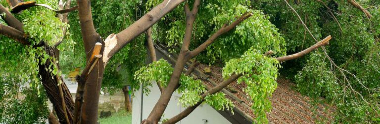 tree damaged by strorm