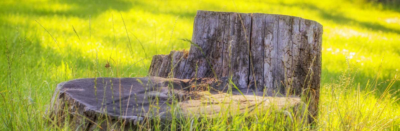 tree stump sticking out of a patch of sunlit grass
